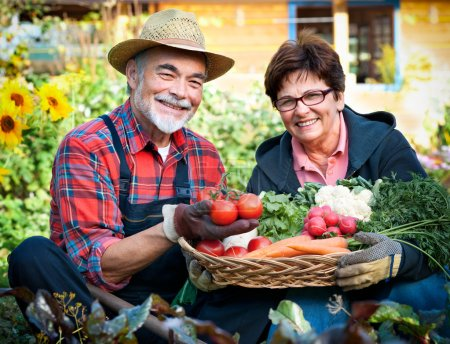 Photo for Senior couple with a basket of harvested vegetables in the garden - Royalty Free Image