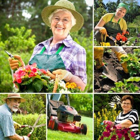 Photo pour Collage de jardinage - image libre de droit
