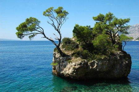Island and trees in Croatia - nature vacations background