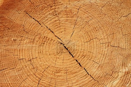 Textur aus Holz