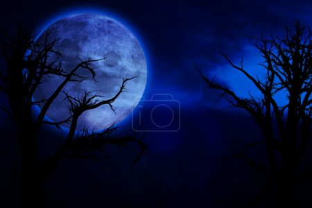 Photo for Scary, creepy forest at night and big full moon - Royalty Free Image