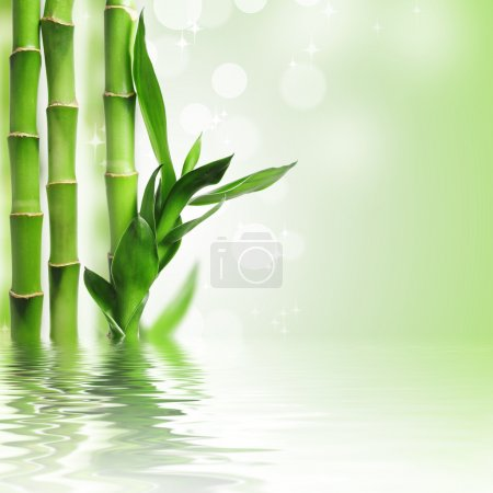 Photo for Green bamboo against bokeh background - Royalty Free Image
