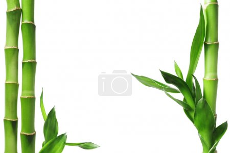 Photo for Green bamboo border isolated on white - Royalty Free Image