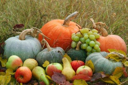 Photo pour Légumes et fruits frais récoltés dans l'herbe et les feuilles d'automne. Lumière du jour. Décoration pour le jour de Thaksgiving - image libre de droit