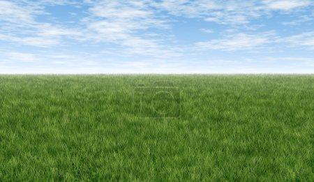 Photo pour Herbe verte horizon fétide avec ciel bleu et nuages idéal pour les doubles pages se propage et l'art de fond représentant pelouse fraîche saine et propre nature naturelle rel - image libre de droit