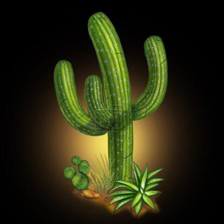 Cactus desert plant
