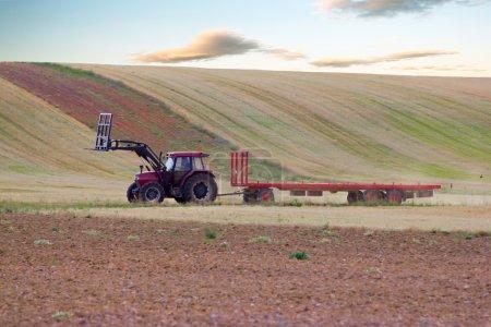 Tractor trailer straw alpacas
