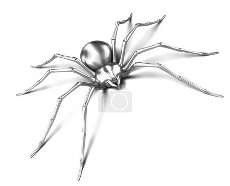 Spider : Black Widow. Isolated on white surface