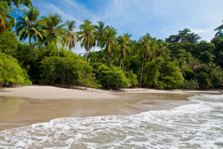 Palm trees on the beach with blue sky