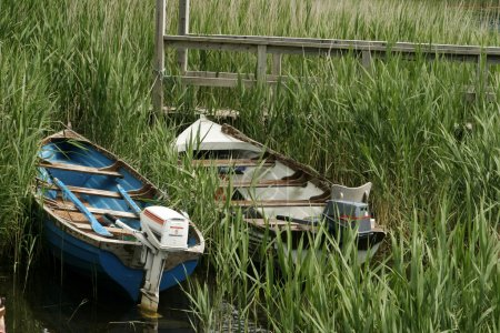 Two Boats In Reeds