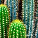 Постер, плакат: Tropical green cactus cacti