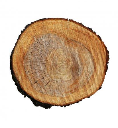 Foto de Tocón de árbol sobre un fondo blanco - Imagen libre de derechos