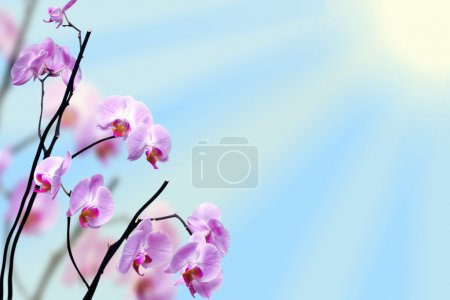 Photo for Violet orchid closep above the sky and sun - Royalty Free Image