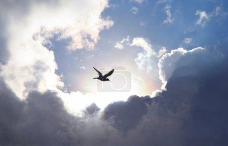 Photo pour Oiseau volant dans le ciel avec une formation spectaculaire de nuages en arrière-plan. Un creux lumineux qui donne une valeur symbolique à la vie et à l'espérance . - image libre de droit