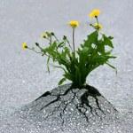Plants emerging through rock hard asphalt. Illustr...