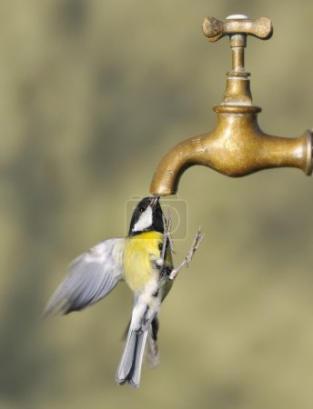 Bird and tap.