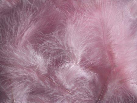 Plumas rosadas