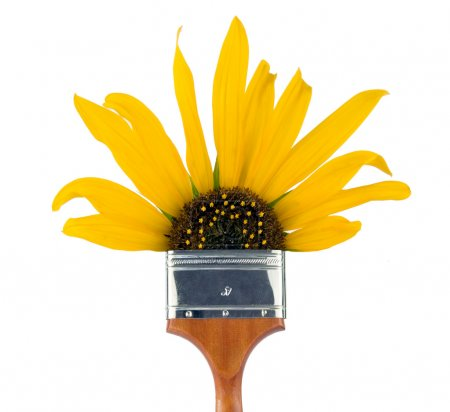 Photo pour Pinceau de quatre pouces avec s tournesol que les soies . - image libre de droit