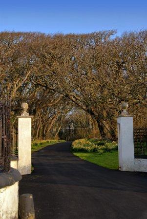 Photo pour Porte d'entrée avec piliers blancs et l'allée qui mène à forrest avec un ciel bleu - image libre de droit
