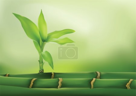 Illustration for Vector drawing. A bamboo, plants and trees. - Royalty Free Image
