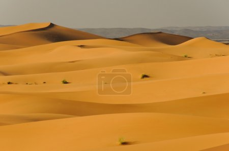 Undulating sand dunes in sahara desert