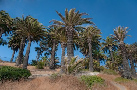 Palm Tree Hill
