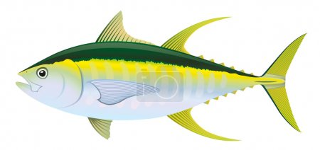 Vector illustration of Yellowfin Tuna, saltwater f...