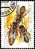 Bienenkönigin mit Drohne Bienen auf Honigwabe