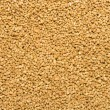 Full frame image of corn meal for birds to each. F...