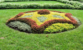 Abstract Shape Created With Plants in Ornamental Garden