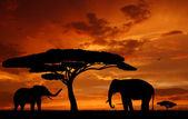 Elephants in the sunset